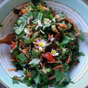 Frühlingssalat mit frischen Wild-Kräutern