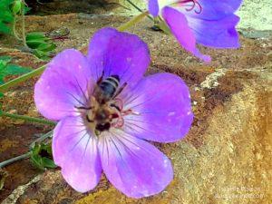 Bienen-Besuch