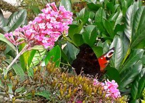 Auf den Spuren eeines Schmetterlings